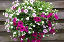 Hanging Basket XL